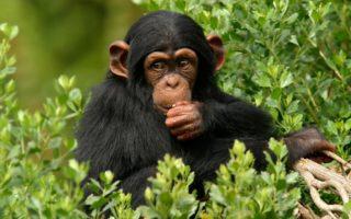 10 Days Best Uganda Safari
