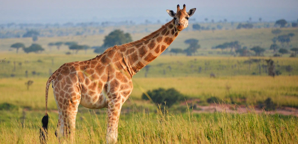 10 Days Best Uganda Safari