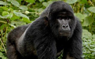 3 Days Bwindi Gorillas from Kigali