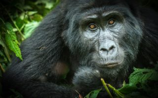 7 Days Gorillas, Chimps & Wildlife