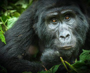 7 Days Gorillas, Chimps & Wildlife