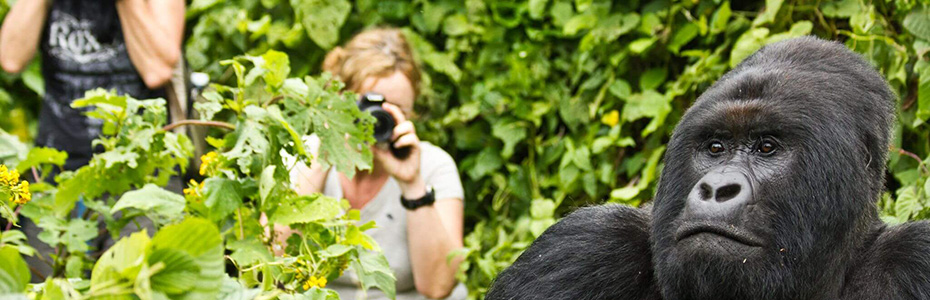 3 Days Uganda Gorillas & Lake Bunyonyi safari