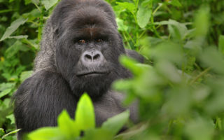 5 Days Gorillas & Wildlife Safari