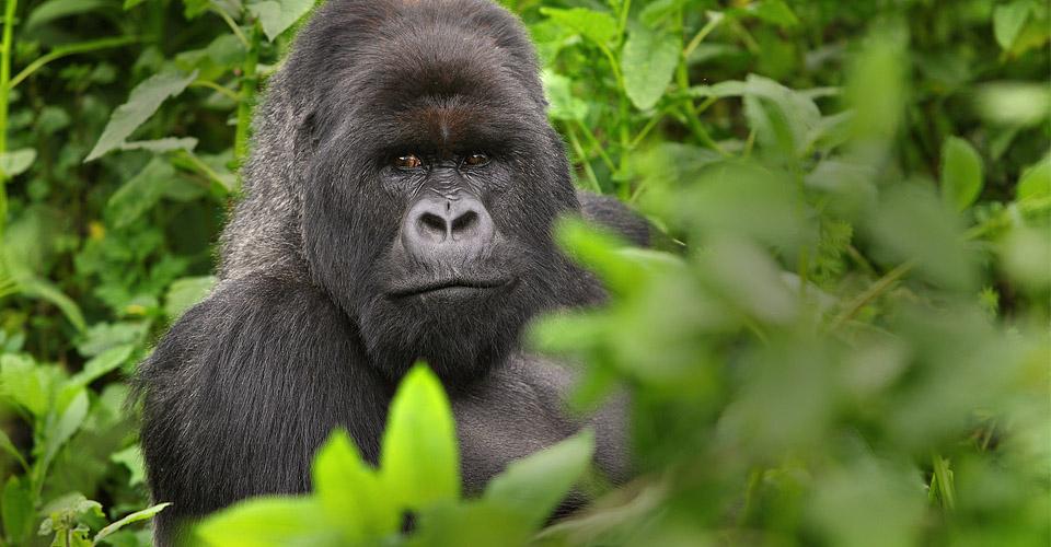 5 Days Gorillas & Wildlife Safari