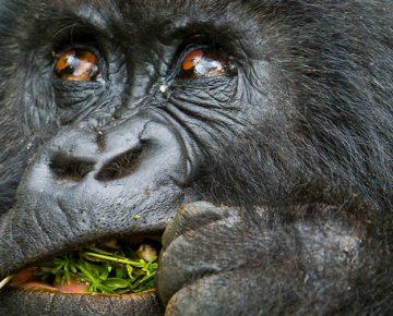 2 Days Rwanda Gorillas & Bisoke Hiking Safari