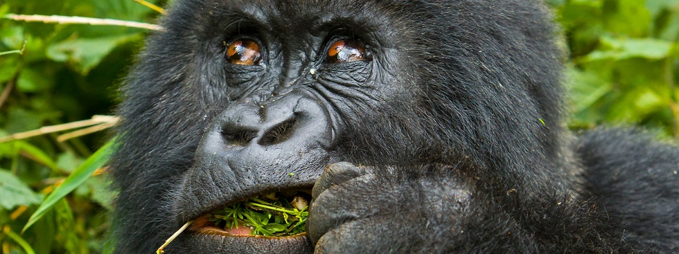 2 Days Rwanda Gorillas & Bisoke Hiking Safari