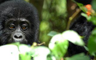 3 Days Mgahinga Gorilla Trekking from Kigali