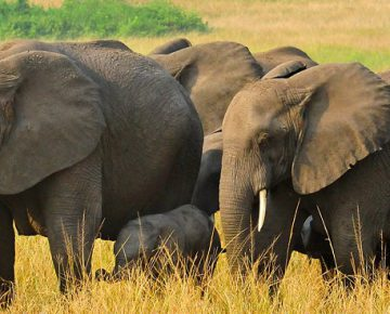 3 Days Queen Elizabeth Wildlife Safari from Kigali