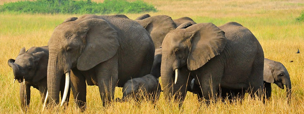 3 Days Queen Elizabeth Wildlife Safari from Kigali