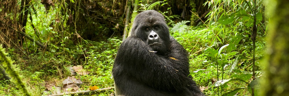 4 Days Uganda Gorillas & Golden Monkeys
