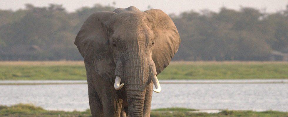 18 Days East African Safari Holiday