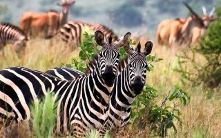 3 Days Akagera National Park Safari