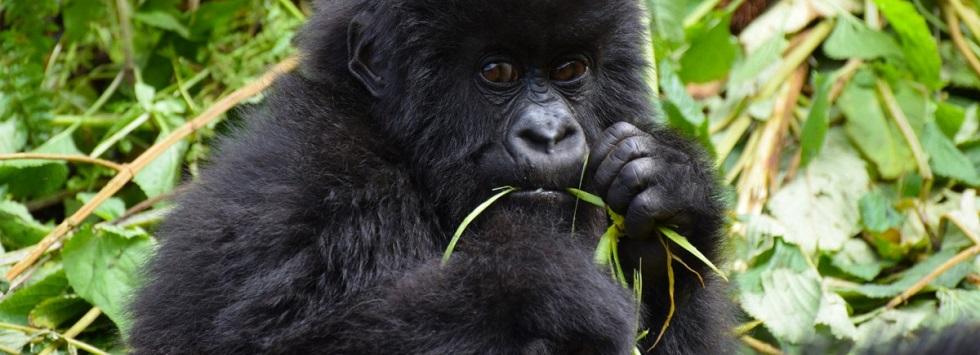 3 Days Rwanda Gorilla Safari in PNV
