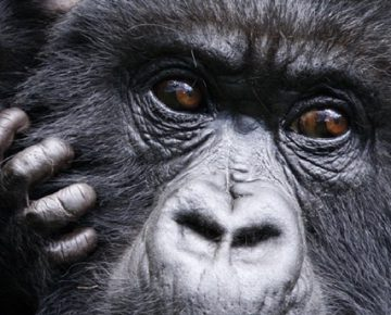 4 Days Rwanda Gorillas & Golden Monkeys