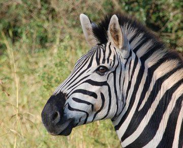 4 Days Rwanda Gorillas & Wildlife Safari