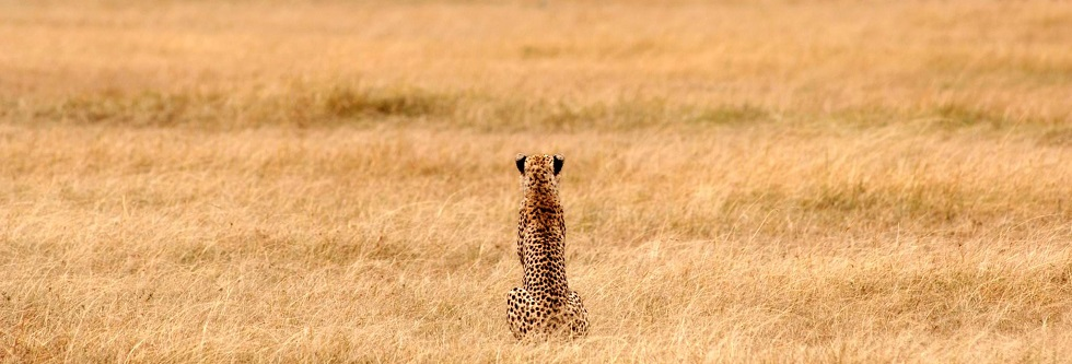 How to plan a Gorilla Trekking & Serengeti safari