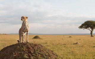 6 Days Rwanda Gorillas & Masai Mara Safari