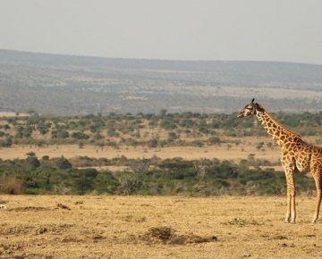 6 Days Uganda Gorilla Trek & Serengeti Safari