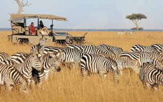 Best way to plan a Gorilla trekking & Masai Mara safari