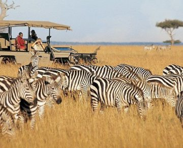 Best way to plan a Gorilla trekking & Masai Mara safari