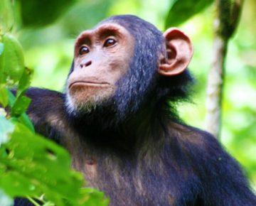 6 Days Uganda Safari from Kigali
