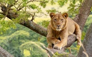 7 Days Uganda Wildlife Safari from Kigali