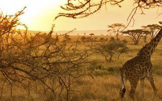 9 Days Bwindi Gorillas, Maasai Mara & Serengeti Tour