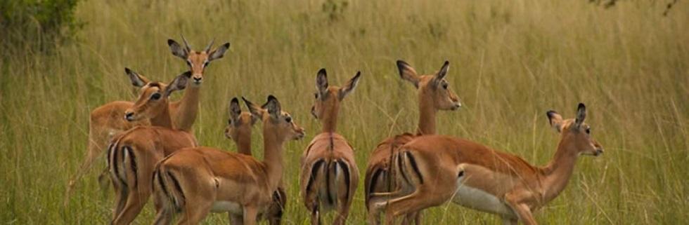 9 Days Seasoning Rwanda Holiday Safari