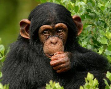 3 Days Nyungwe Chimpanzee Trekking in Rwanda