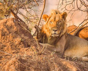 15 Days Uganda Wildlife, Gorillas & Hiking Special Adventure