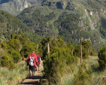 7 Days Murchison Falls & Mount Rwenzori Hike
