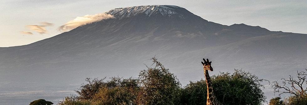 Planning Rwanda Gorilla Trekking & Kilimanjaro Hike
