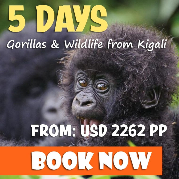 5 Days Uganda Tour from Kigali Offer