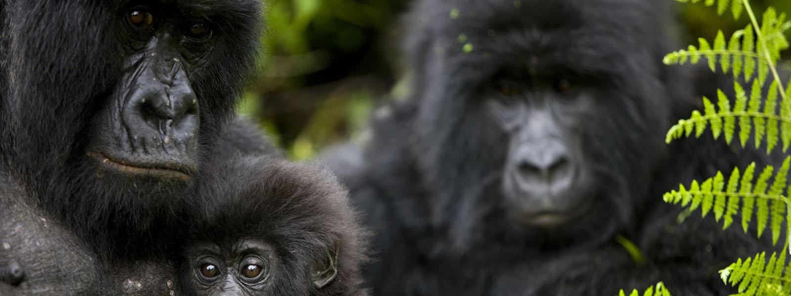 Our Gorilla Trekking Company